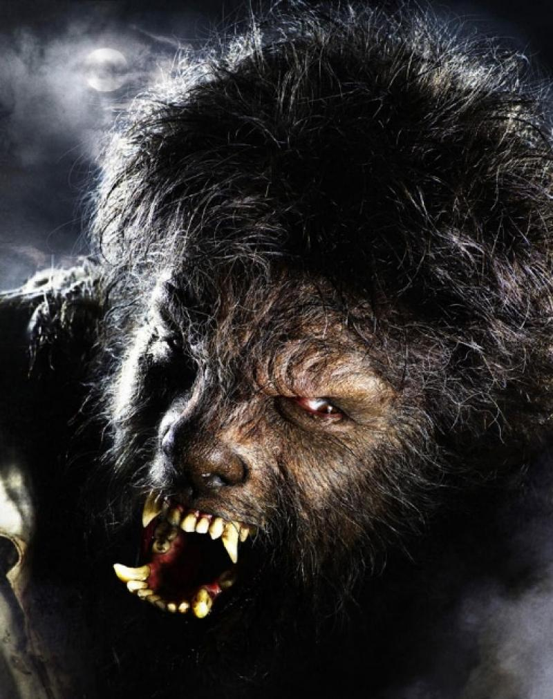 Return of the hairy cornflake: somewhere in there is Benicio Del Toro, star of The Wolfman