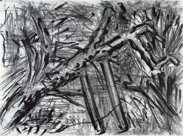 Kossoff_Cherry_Tree_drawing