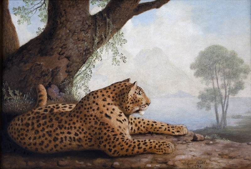 George Stubbs,  'Reclining Leopard', 1778, Enamel on ceramic © Private Collection