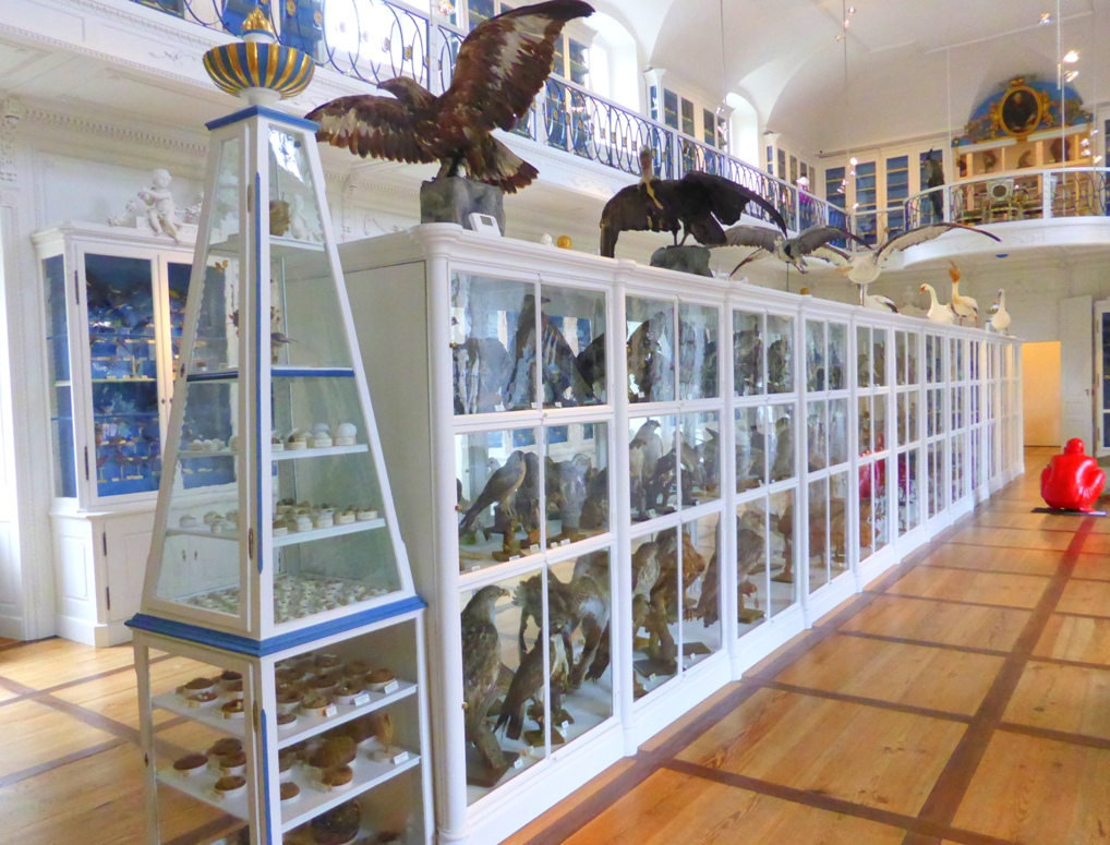 Vogelsaal in Bamberg Natural History Museum